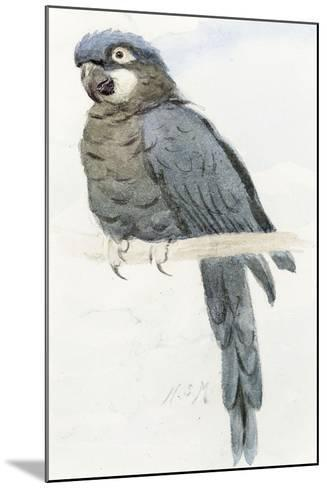 Hyacinth Macaw, C.1890-Henry Stacey Marks-Mounted Giclee Print