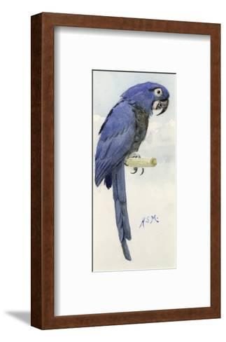 Hyacinth Macaw, C.1890-Henry Stacey Marks-Framed Art Print