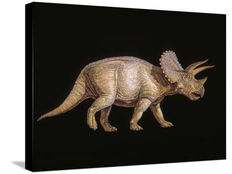 Triceratops Dinosaur-Joe Tucciarone-Stretched Canvas Print