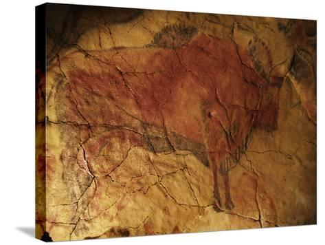 Altamira Cave Painting of a Bison-Javier Trueba-Stretched Canvas Print