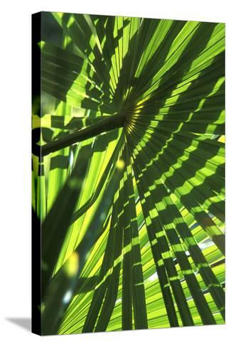 Palm Leaves-Dr. Keith Wheeler-Stretched Canvas Print