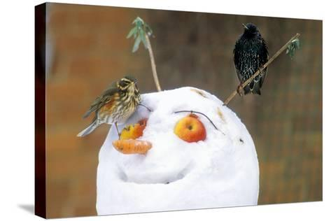 Birds Perched on a Snowman-Dr. Keith Wheeler-Stretched Canvas Print