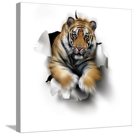 Tiger, Artwork-SMETEK-Stretched Canvas Print