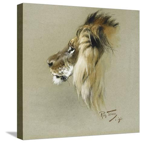 A Lion's Head-Richard Friese-Stretched Canvas Print