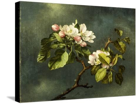 Apple Blossoms-Martin Johnson Heade-Stretched Canvas Print