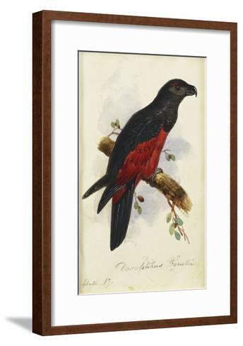 Pesquet's Dasyptilus (Dasyptilus Pesquetii)-Edward Lear-Framed Art Print