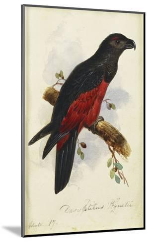 Pesquet's Dasyptilus (Dasyptilus Pesquetii)-Edward Lear-Mounted Giclee Print