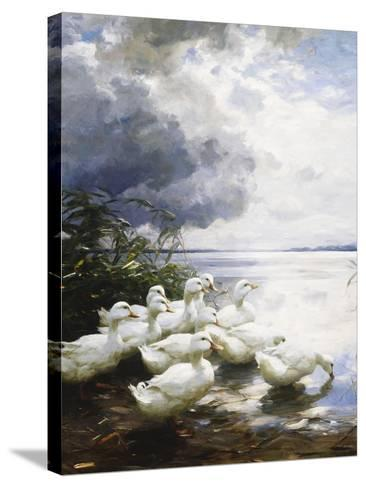 Ducks at the Lake's Edge-Alexander Koester-Stretched Canvas Print