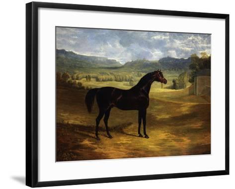 Jack Spigot, a Dark Bay Racehorse in a Paddock at Bolton Hall-John Frederick Herring I-Framed Art Print