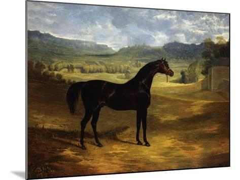 Jack Spigot, a Dark Bay Racehorse in a Paddock at Bolton Hall-John Frederick Herring I-Mounted Giclee Print