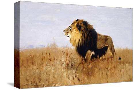 Lion Watching for Prey-Wilhelm		 Kuhnert-Stretched Canvas Print