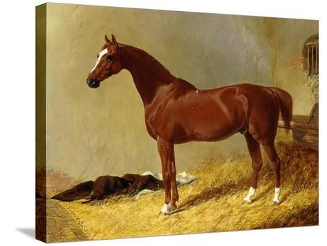 A Bay Racehorse in a Stall-John Frederick Herring I-Stretched Canvas Print