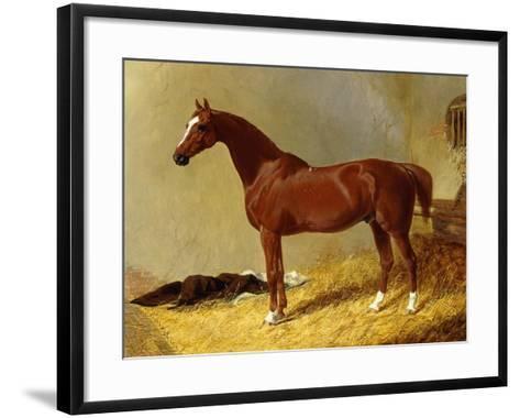 A Bay Racehorse in a Stall-John Frederick Herring I-Framed Art Print