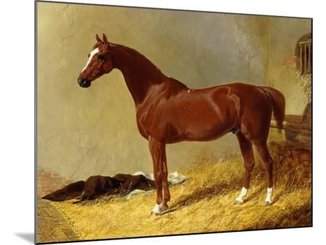A Bay Racehorse in a Stall-John Frederick Herring I-Mounted Giclee Print
