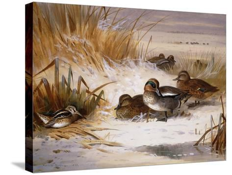 Mallard Widgeon and Snipe at the Edge of a Pool in Winter-Archibald Thorburn-Stretched Canvas Print