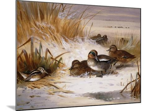 Mallard Widgeon and Snipe at the Edge of a Pool in Winter-Archibald Thorburn-Mounted Giclee Print