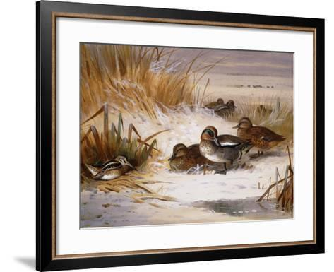 Mallard Widgeon and Snipe at the Edge of a Pool in Winter-Archibald Thorburn-Framed Art Print