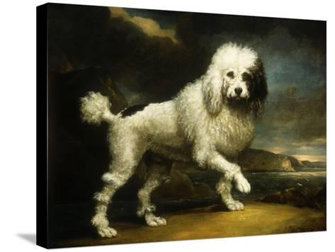 A Standard Poodle in a Coastal Landscape-James Northcote-Stretched Canvas Print