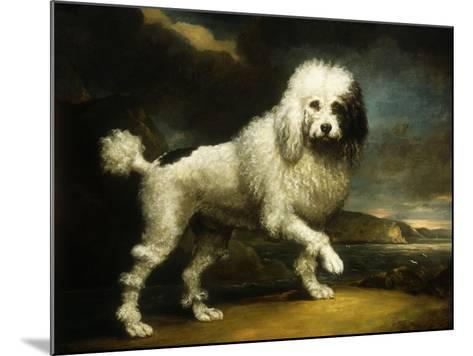 A Standard Poodle in a Coastal Landscape-James Northcote-Mounted Giclee Print