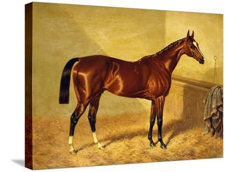 Orlando, a Bay Racehorse in a Loosebox-John Frederick Herring I-Stretched Canvas Print
