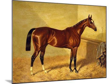 Orlando, a Bay Racehorse in a Loosebox-John Frederick Herring I-Mounted Giclee Print