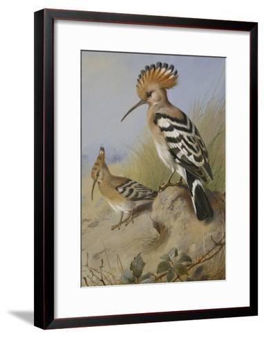 Hoopoes-Archibald Thorburn-Framed Art Print