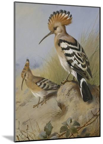 Hoopoes-Archibald Thorburn-Mounted Giclee Print