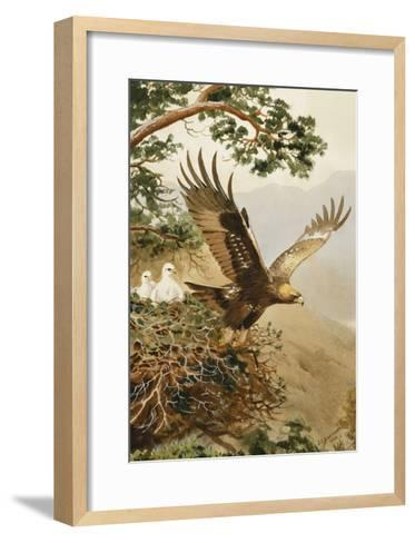 Golden Eagle with Young, Aviemore-John Cyril Harrison-Framed Art Print