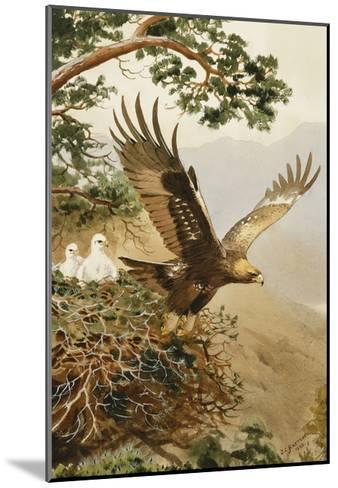 Golden Eagle with Young, Aviemore-John Cyril Harrison-Mounted Giclee Print