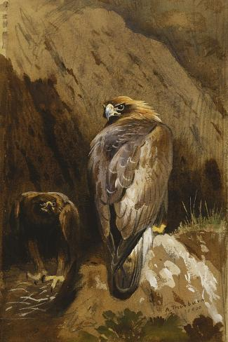 Golden Eagles at their Eyrie-Archibald		 Thorburn-Stretched Canvas Print
