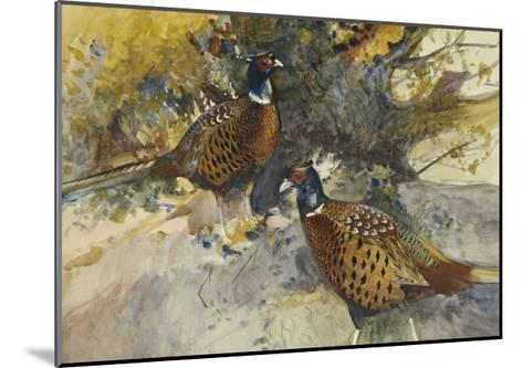 Cock Pheasants under a Beech Tree-Frank		 Southgate-Mounted Giclee Print