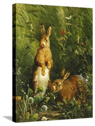 Hares-Olaf August		 Hermansen-Stretched Canvas Print