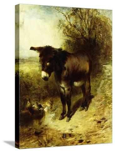 A Brown Study-William Huggins-Stretched Canvas Print