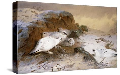 Ptarmigan in the Snow-Archibald Thorburn-Stretched Canvas Print