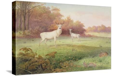 From 'The Knowsley Menagerie', October 24th 1850-Joseph Wolf-Stretched Canvas Print