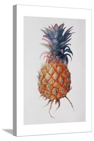 Queenie Pineapple, 1994-Rebecca John-Stretched Canvas Print