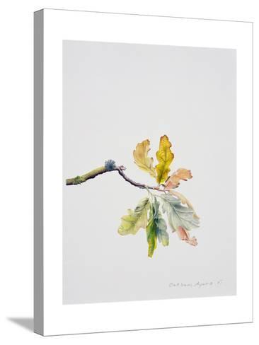 Oak Leaves, 2001-Rebecca John-Stretched Canvas Print
