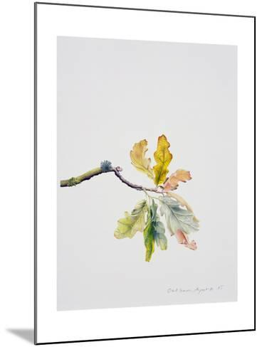 Oak Leaves, 2001-Rebecca John-Mounted Giclee Print