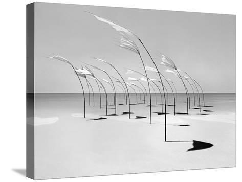 Windblumen 2-Jaschi Klein-Stretched Canvas Print