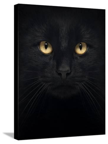 Close-Up Of A Black Cat Looking At The Camera, Isolated On White-Life on White-Stretched Canvas Print