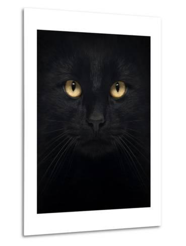 Close-Up Of A Black Cat Looking At The Camera, Isolated On White-Life on White-Metal Print