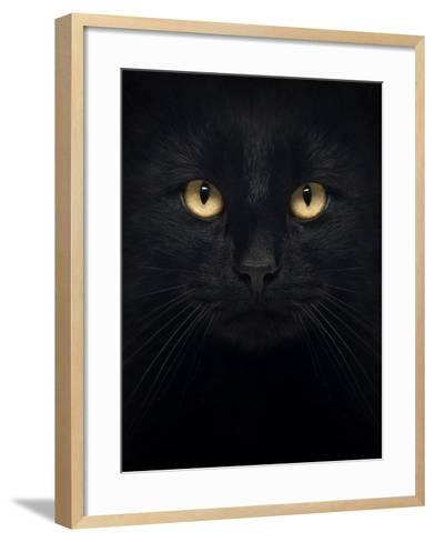 Close-Up Of A Black Cat Looking At The Camera, Isolated On White-Life on White-Framed Art Print