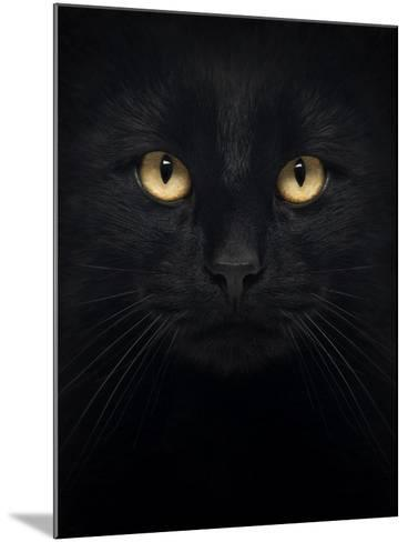 Close-Up Of A Black Cat Looking At The Camera, Isolated On White-Life on White-Mounted Art Print
