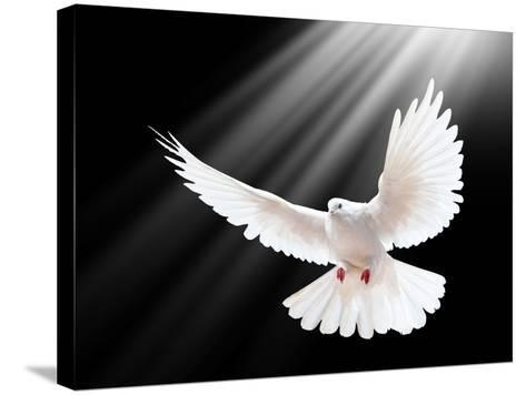 A Free Flying White Dove Isolated On A Black Background-Irochka-Stretched Canvas Print