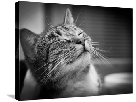 Happy Smiling Cat Portrait In Black And White-Michal Bednarek-Stretched Canvas Print