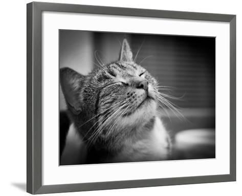 Happy Smiling Cat Portrait In Black And White-Michal Bednarek-Framed Art Print