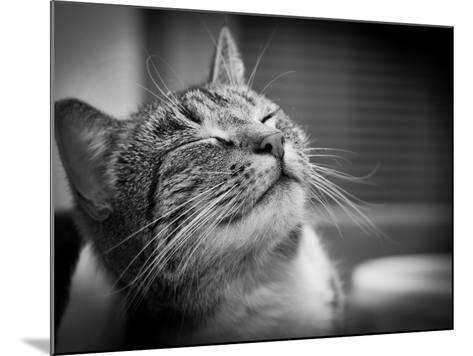 Happy Smiling Cat Portrait In Black And White-Michal Bednarek-Mounted Art Print