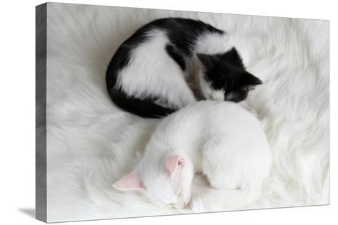 Two Sleeping Little Kitten On White Carpet-Yastremska-Stretched Canvas Print