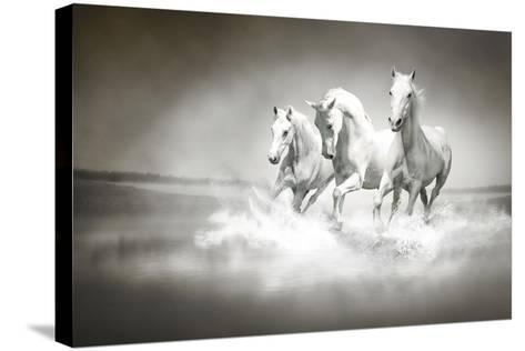 Herd Of White Horses Running Through Water-varijanta-Stretched Canvas Print