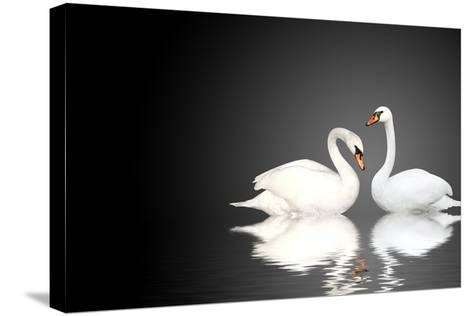 Two White Swans On Black Background-frenta-Stretched Canvas Print